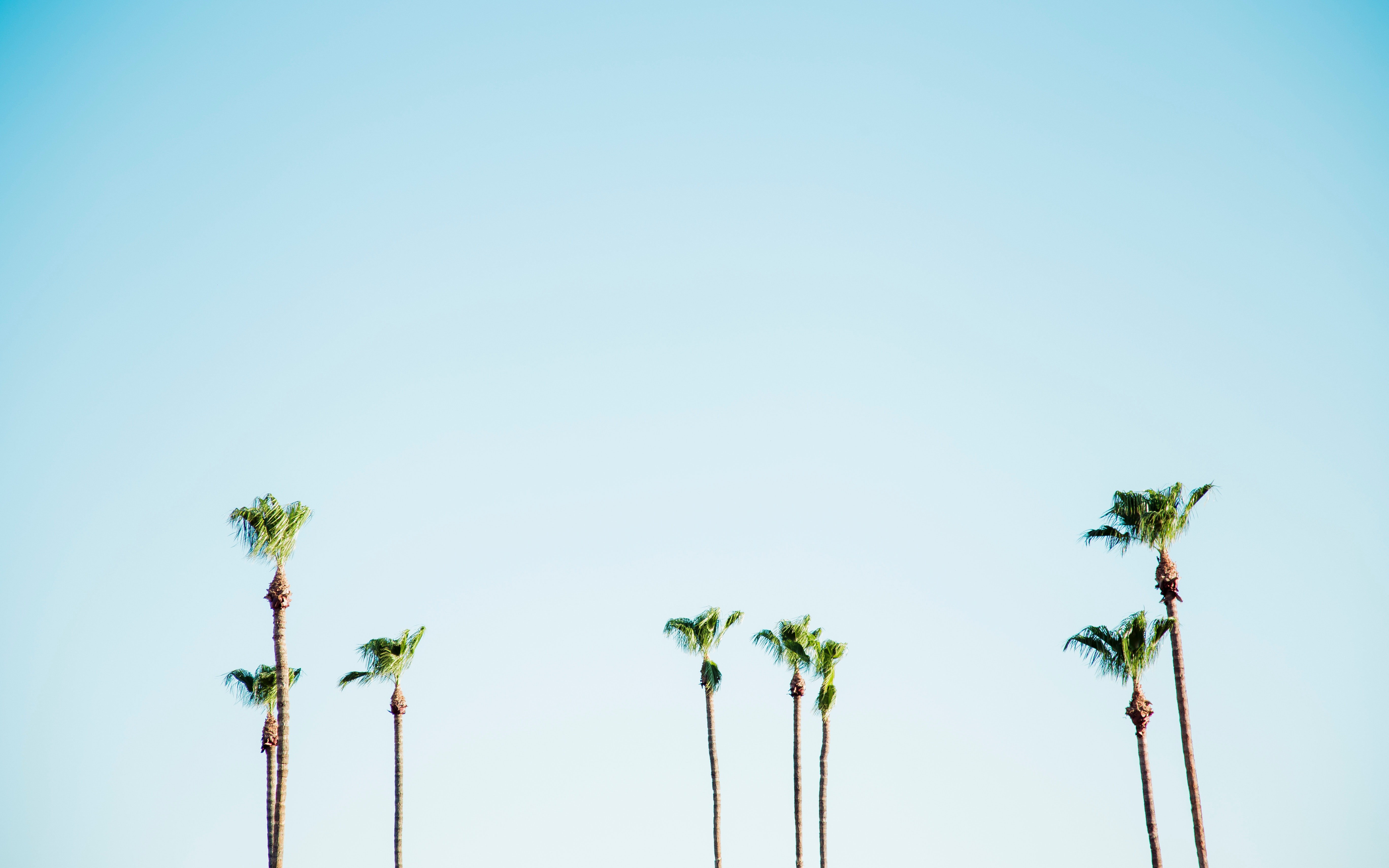 palm tree wallpaper from away look small and cute