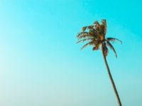 single long palm tree with sky background