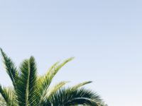 long leaves of palm tree blue sky background