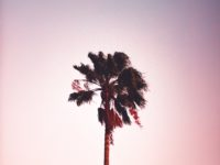 palm tree wallpaper for mobile background sing tree with white background