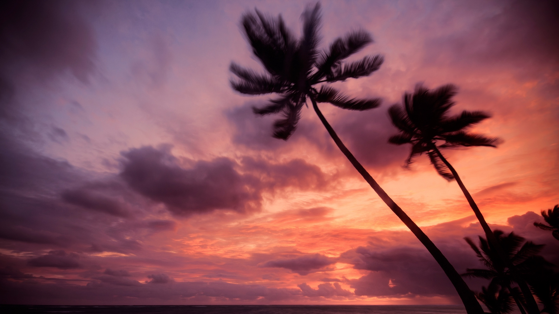 palm trees light sunset night sea 1920x1080