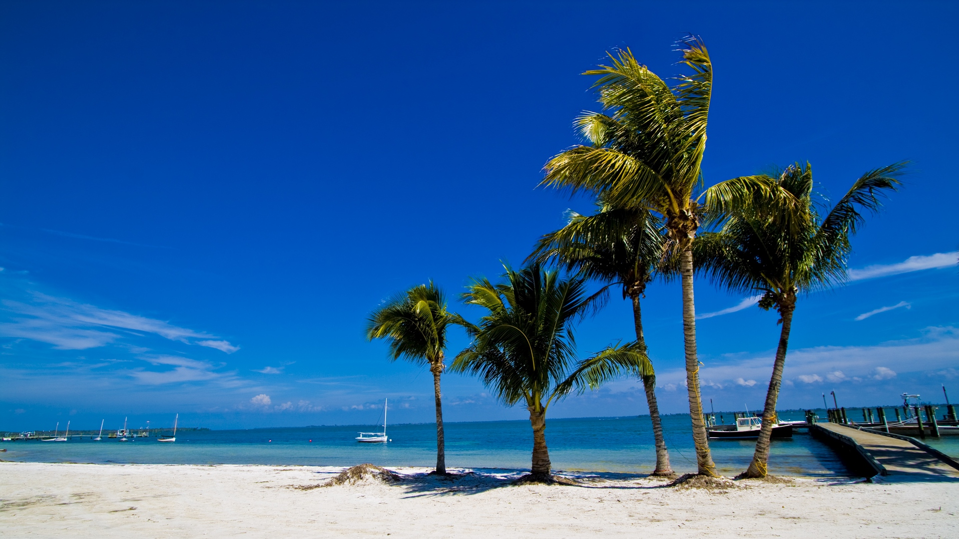 palm trees sand beach summer 1920x1080