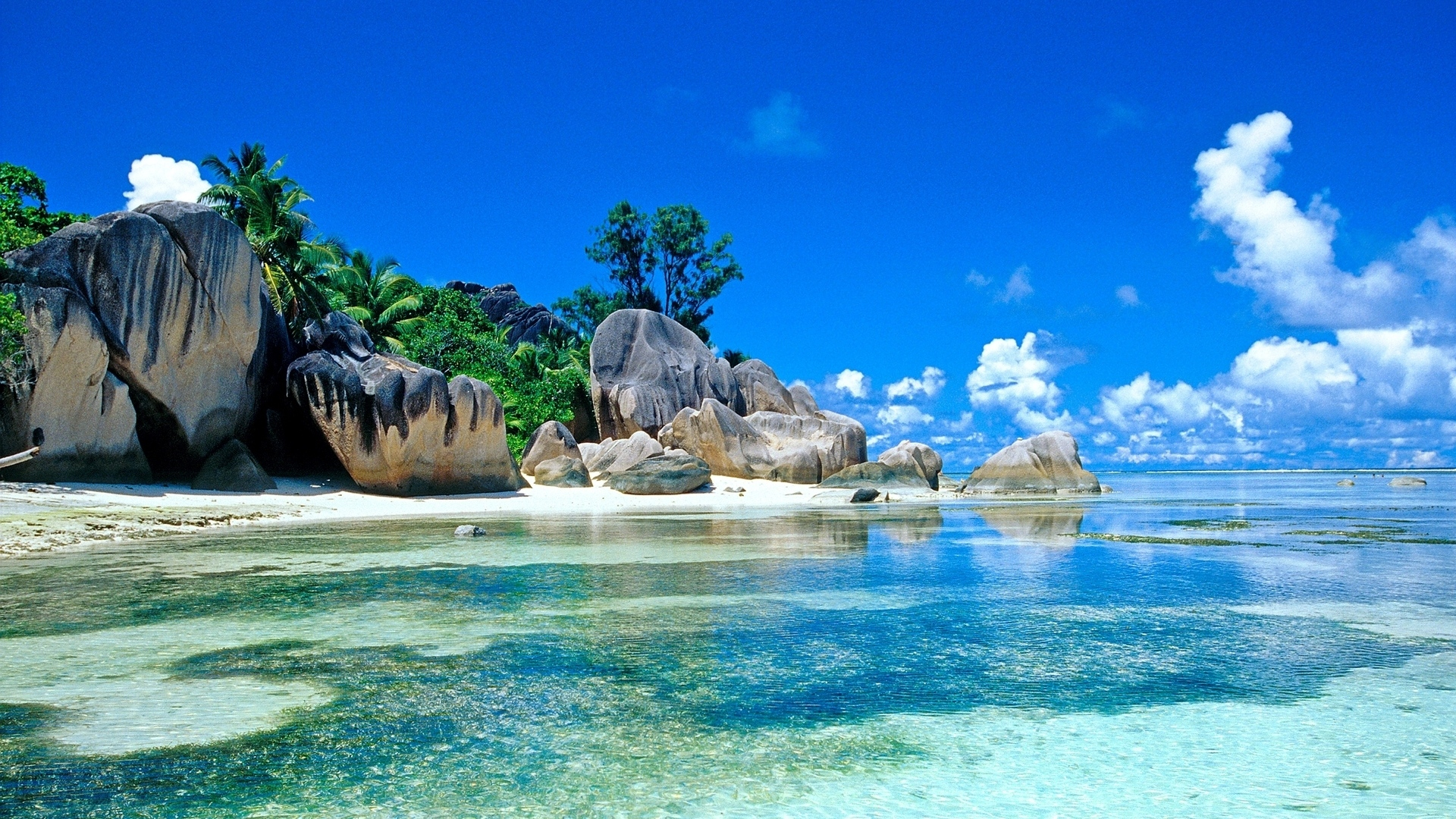 sea palm trees coast stones boulders tropics 1920x1080