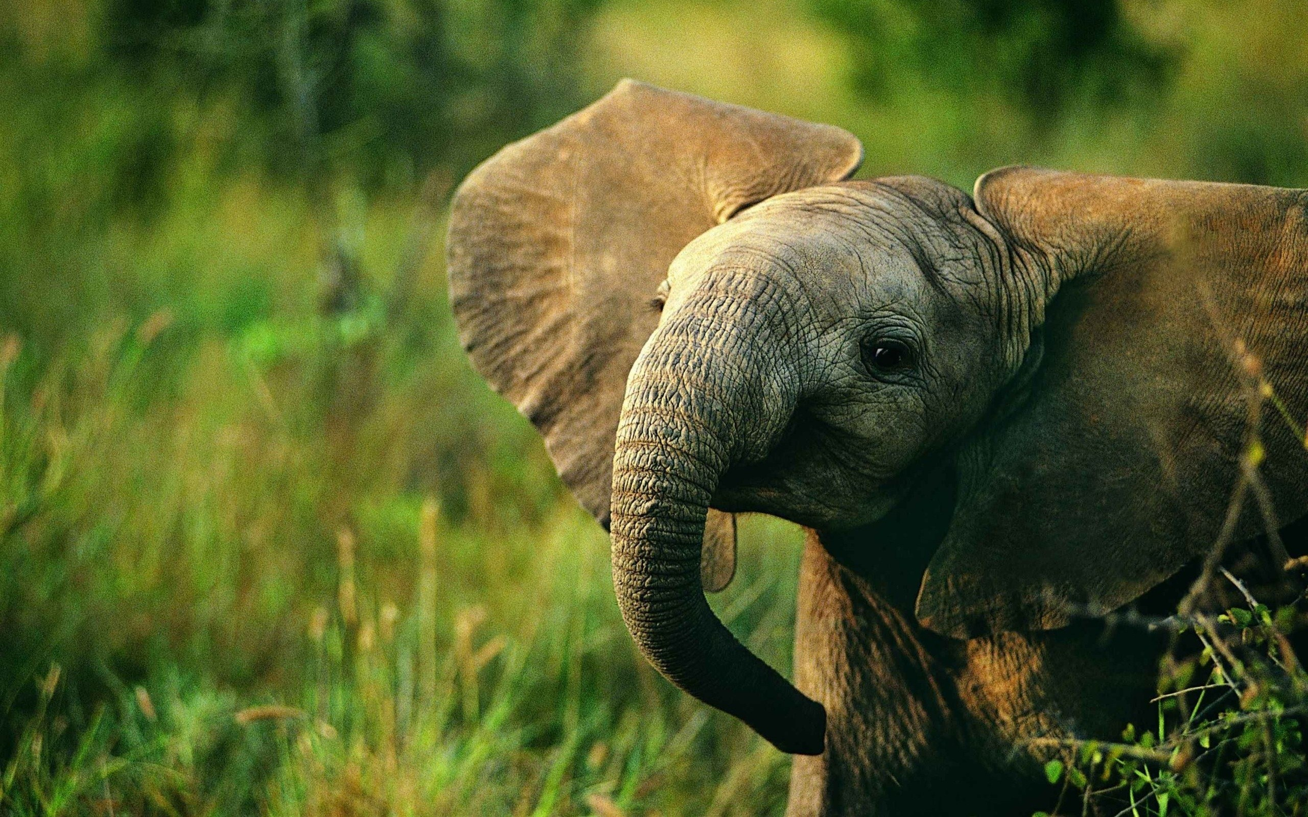 elephant mobile iphone wallpapers