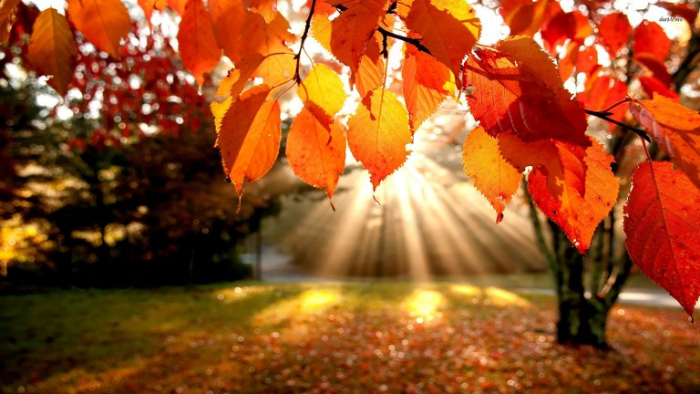 sun lights on leaves red mobile iphone wallpapers_768x432