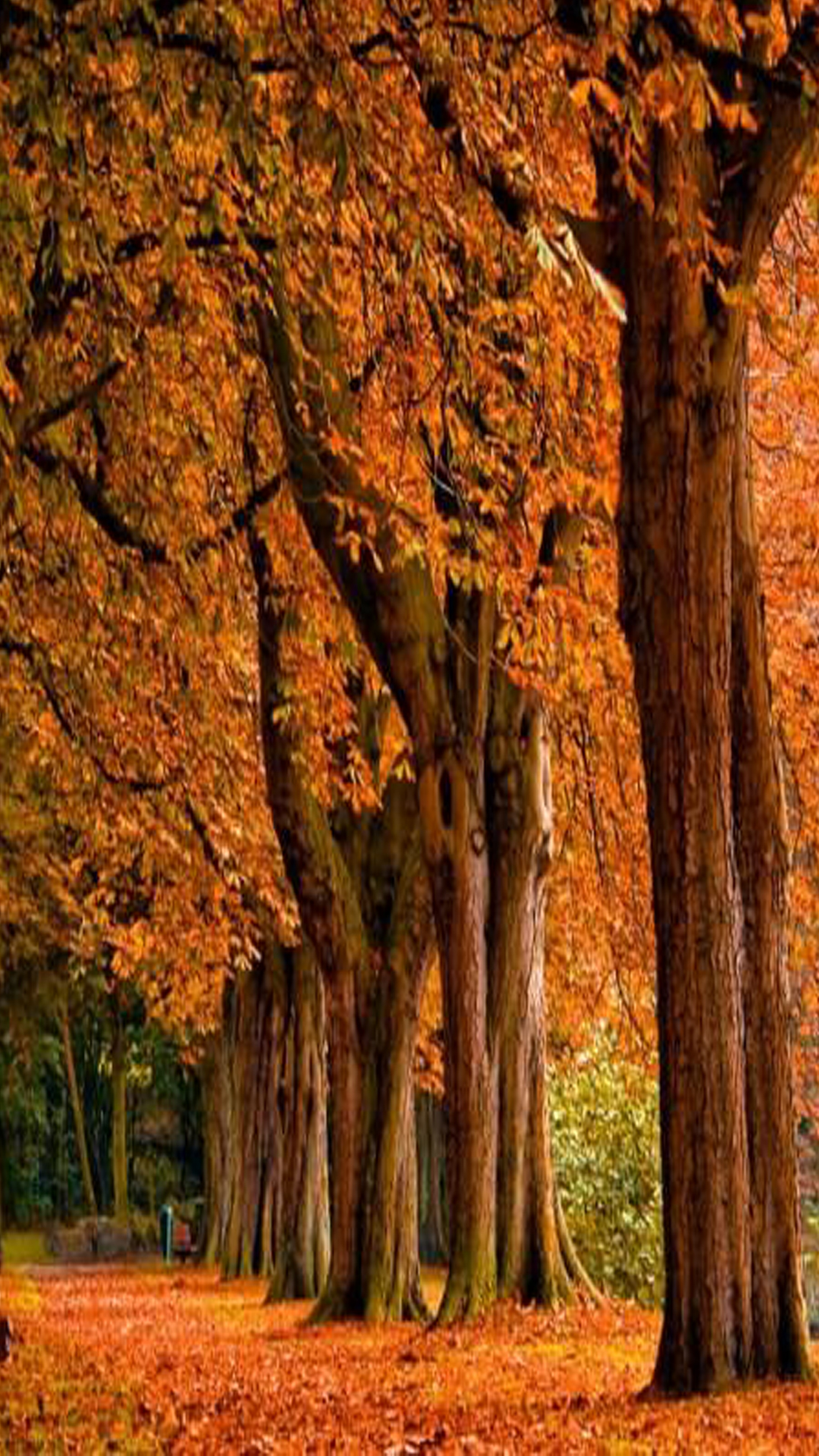 orange way with tree android background
